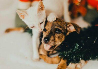 Animais posam em ensaio de Natal em busca de adoção