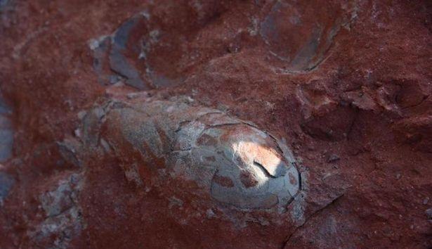 Ninho de ovos de dinossauro com 130 milhões de anos é encontrado