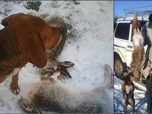 "Cachorro ""atira"" e mata dono durante tarde de caça"