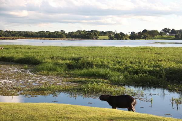 Pantanal arara Ed Wanderley_pantanal001