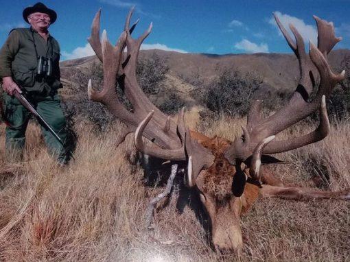 Tentando caçar leões, homem acaba baleado e morre em savana africana