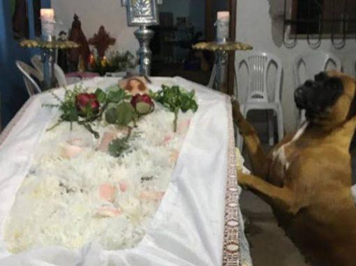 Cadela visita túmulo da dona após emocionar a todos no seu velório