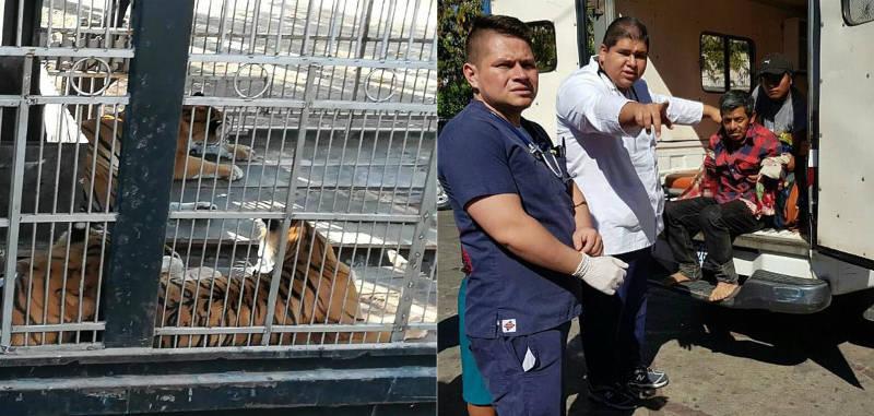 Homem tem dois braços amputados após tentar alimentar tigres em zoo