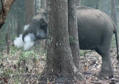 """Imagem de elefante """"fumando"""" intriga cientistas"""