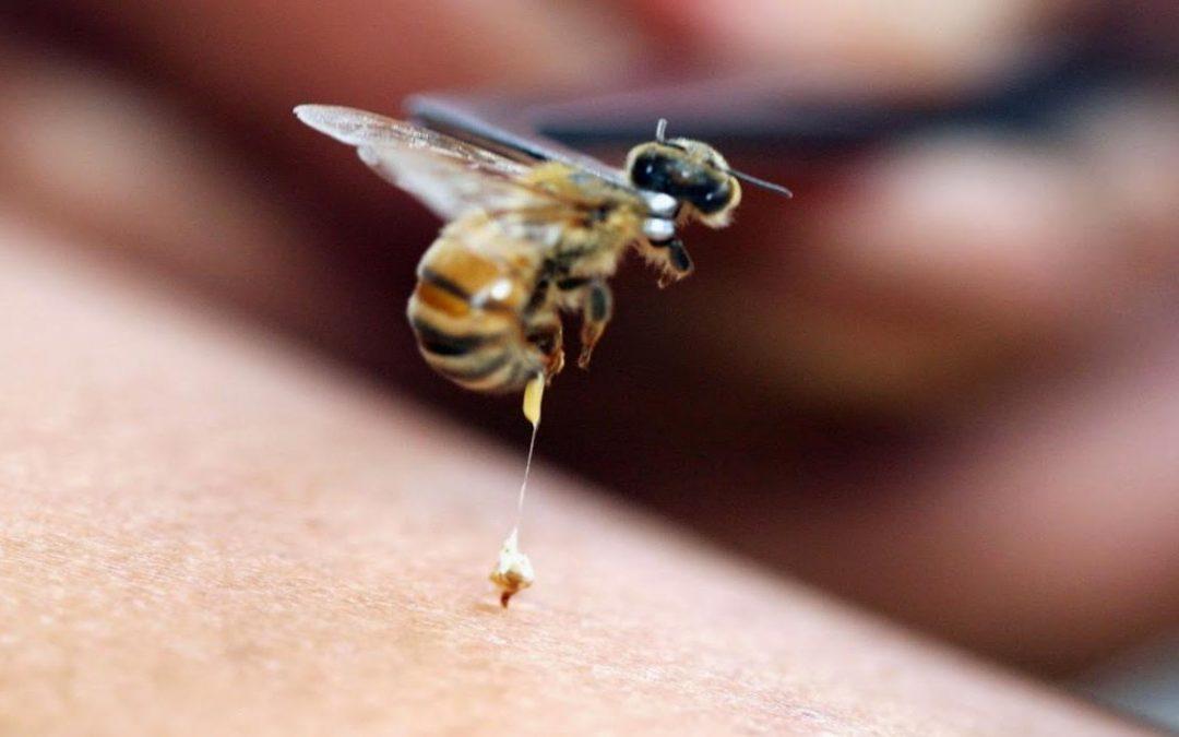 Mulher morre após picada de abelha em tratamento alternativo